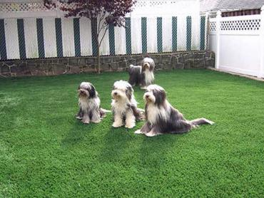 Artificial Grass Photos: Artificial Turf Warrington, Florida Pet Grass, Backyard Landscaping