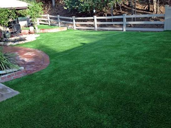 Artificial Grass Photos: Outdoor Carpet Belle Glade, Florida Cat Playground, Beautiful Backyards